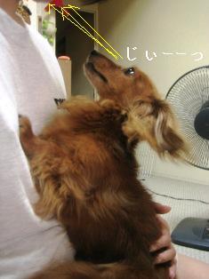 IMG_5011blog.jpg