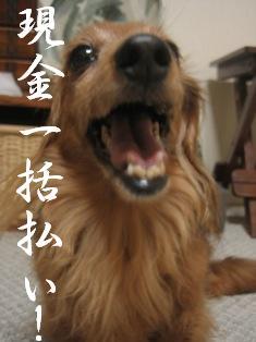 IMG_5130blog.jpg
