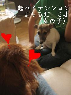 IMG_5459blog.jpg