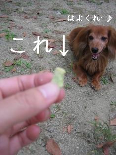 IMG_5619blog.jpg
