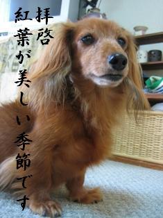 IMG_5753blog.jpg