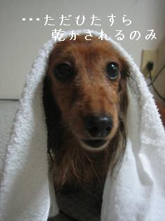 IMG_5762blog.jpg