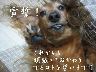 IMG_5901blog.jpg