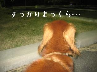 IMG_5907blog.jpg