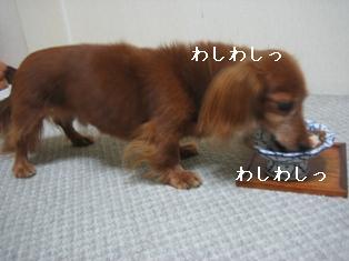 IMG_5918blog.jpg