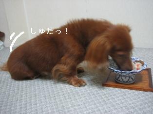 IMG_5919blog.jpg