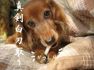 IMG_5969blog.jpg