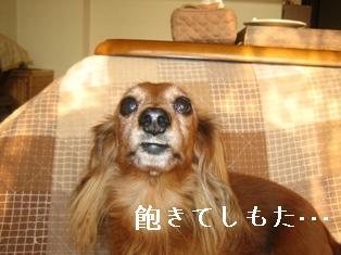 IMG_5986blog.jpg