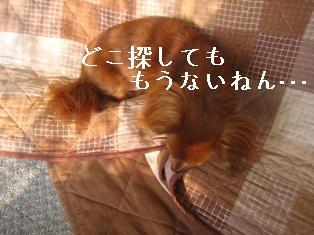 IMG_5989blog.jpg