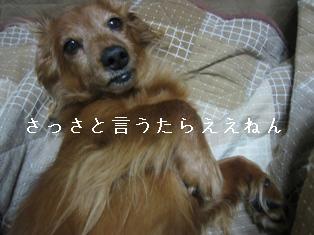 IMG_6025blog.jpg
