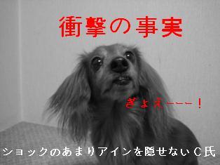 IMG_6084blog.jpg