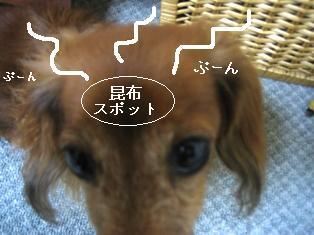 IMG_6090blog.jpg
