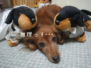 IMG_6102blog.jpg