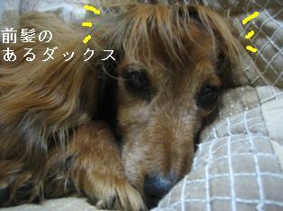 IMG_6201blog.jpg