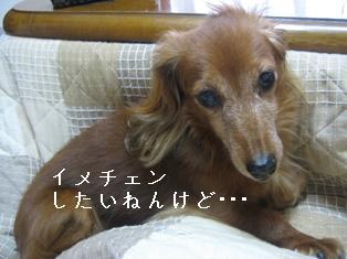 IMG_6209blog.jpg