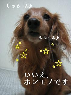IMG_6601blog.jpg