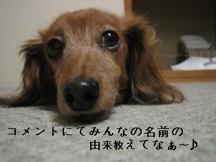 IMG_6612blog.jpg