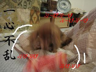 IMG_6691blog.jpg