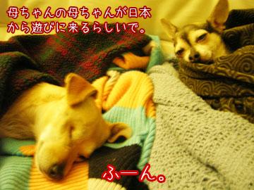 kachan3.jpg