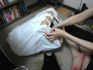 箱外で爪を研ぐ愛猫