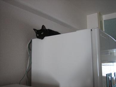 寒くなったら冷蔵庫