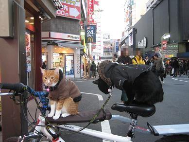 チャリと歌舞伎猫