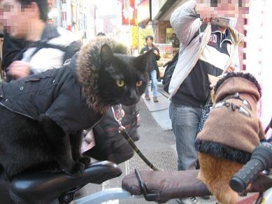 チャリと歌舞伎猫3