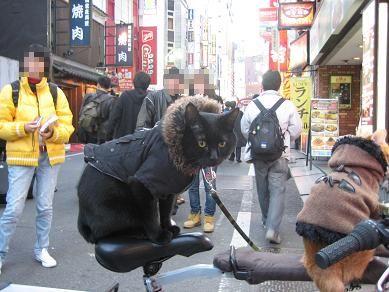 チャリと歌舞伎猫2