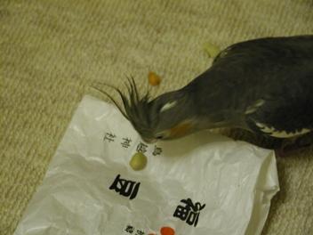 鳥越神社の袋