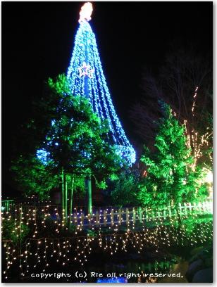 青いツリー