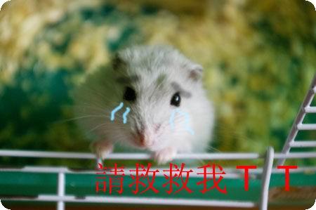原子学姐家的仓鼠