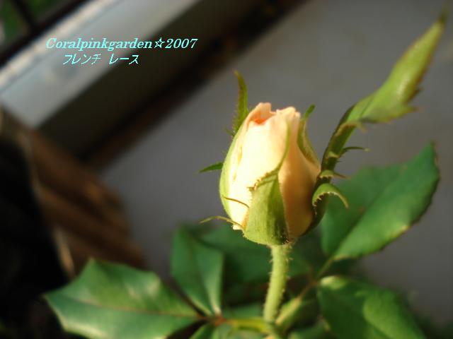 20071105064002.jpg