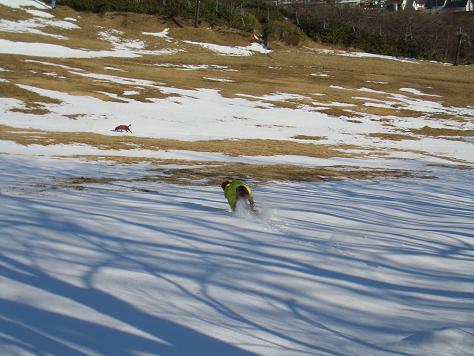 アラン君と雪遊び 014