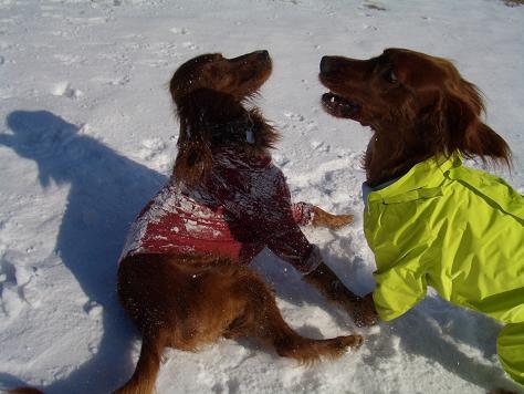アラン君と雪遊び 001