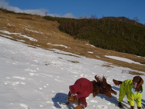 アラン君と雪遊び 011