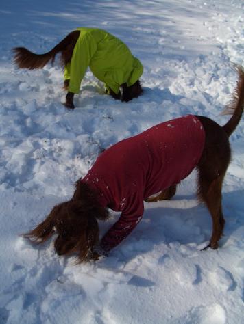 アラン君と雪遊び 012