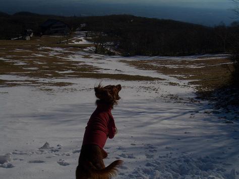 アラン君と雪遊び 008
