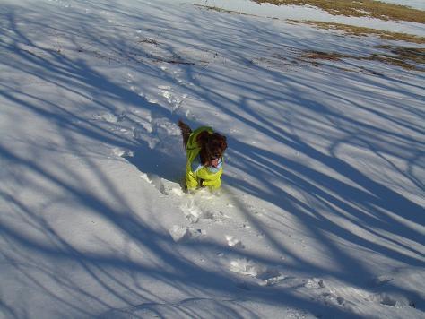 アラン君と雪遊び 015