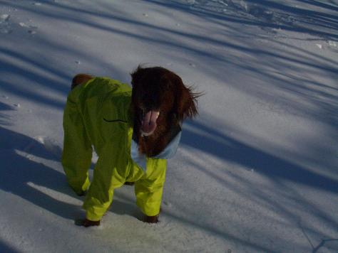 アラン君と雪遊び 016