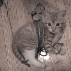 Hisoka猫