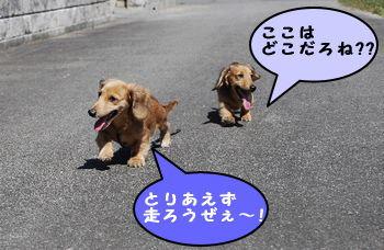 DSC_2701.jpg