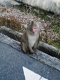 箕面お猿その3
