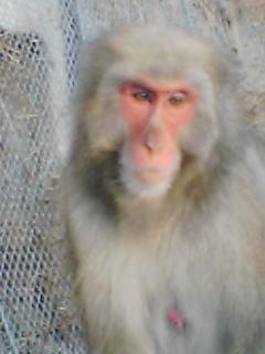 箕面お猿その5