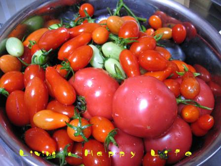 神楽地区の農家さんのトマト