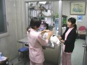 仮の診察室