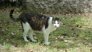 park_cat0505_1.jpg