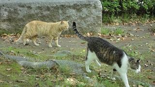 park_cat0505_2.jpg