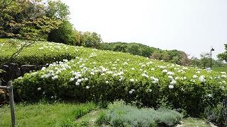 park_flower1.jpg