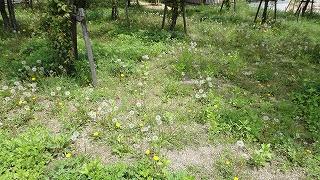 park_flower4.jpg