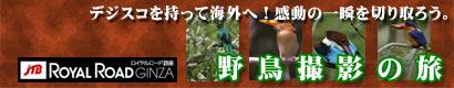 野鳥撮影の旅